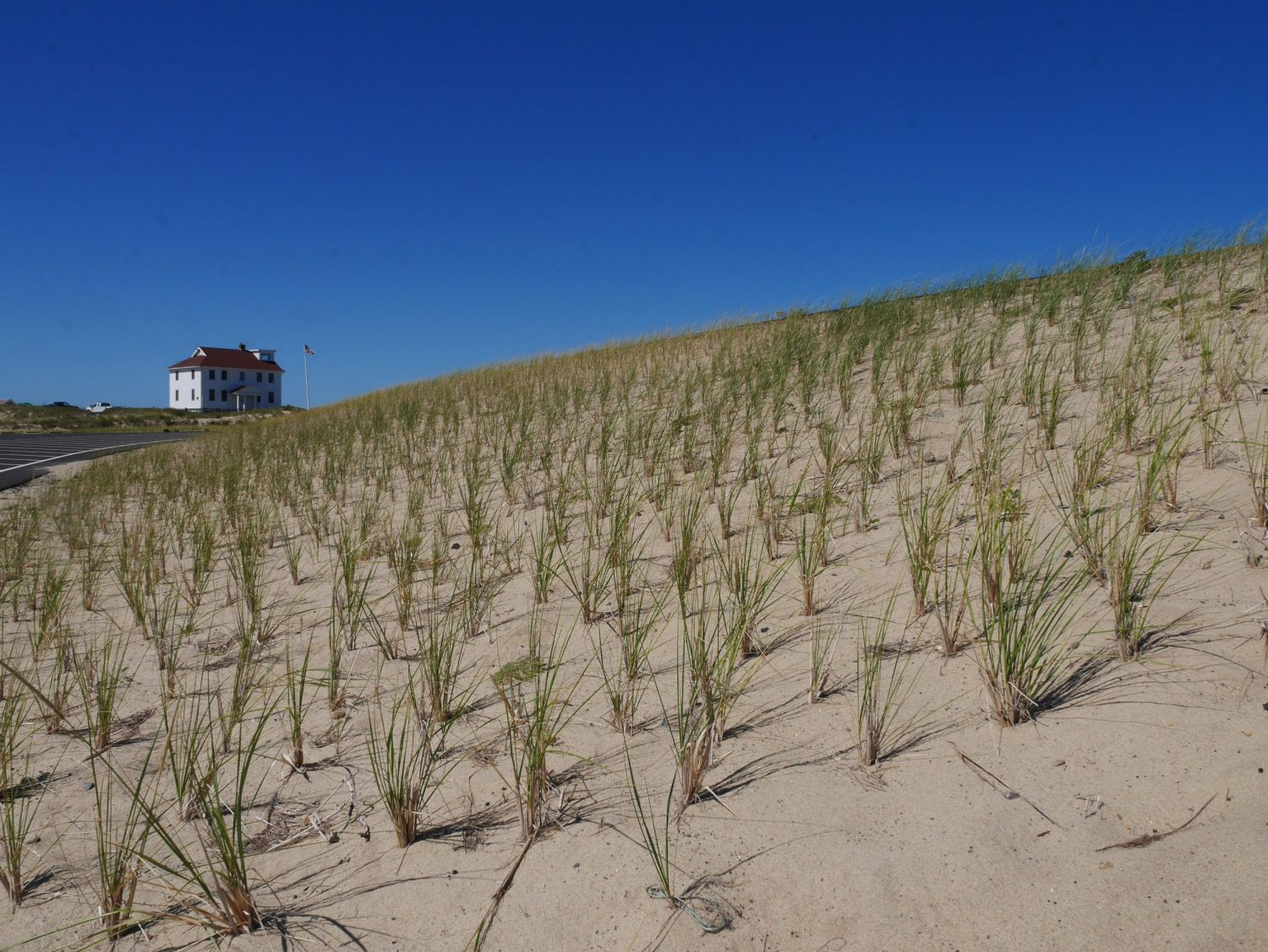 Dune Restoration at Cape Cod a very detailed piece of work