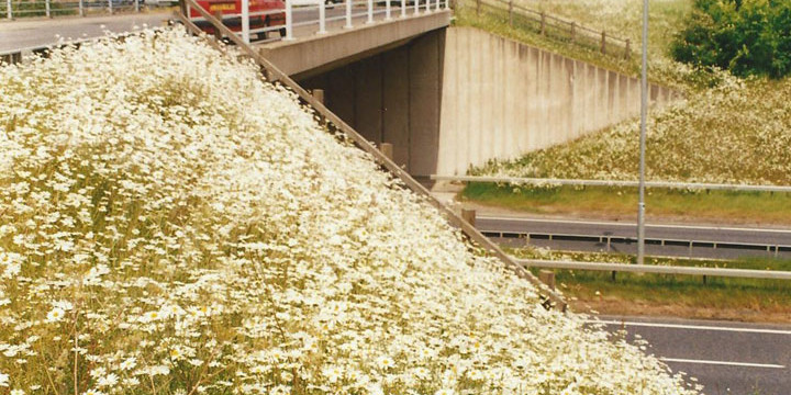 Trunk Road Wildflower Planting Scheme